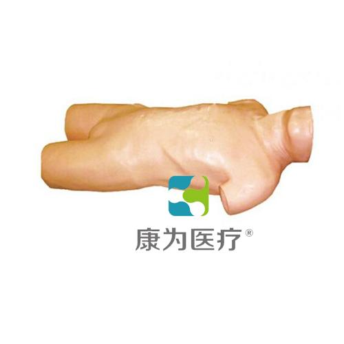 """""""康为医疗""""高级腹腔穿刺训练模型"""