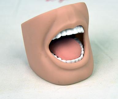 """""""康为医疗""""成人全口牙可开闭模型"""