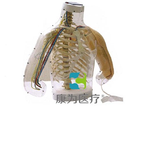 """""""康为医疗""""高级上臂肌肉注射及对比模型(带检测警示系统)"""