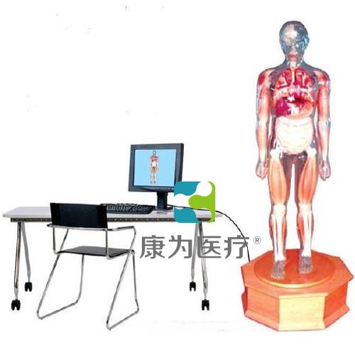 """""""康为医疗""""多媒体解剖学教学综合模拟示教人"""