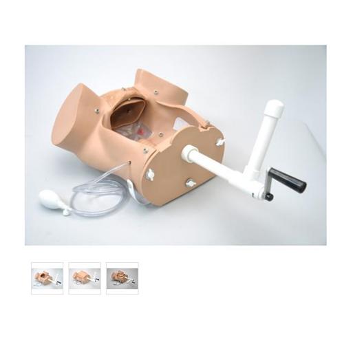 德国3B Scientific®供1005790使用的分娩模拟系统