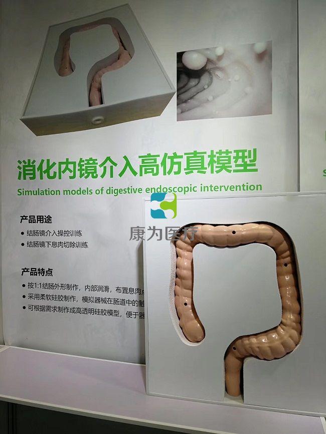 消化内镜介入高仿真模型-结肠镜介入模拟器