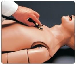 """""""康为医疗""""S315.200成人心肺音听诊模型(心/呼吸内科模型)"""