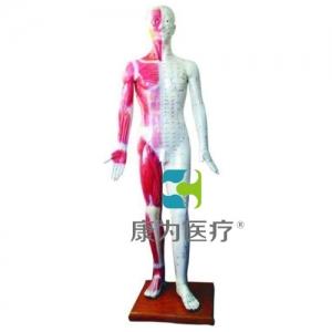 """""""康为医疗""""人体针灸模型178CM"""