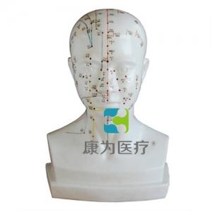 """""""康为医疗""""头针灸模型20CM"""