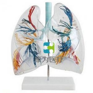 """""""康为医疗""""透明肺段模型"""