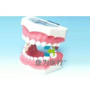 """""""康为医疗""""刷牙指导模型(乳牙)"""