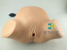 气囊仿生助产技术模型